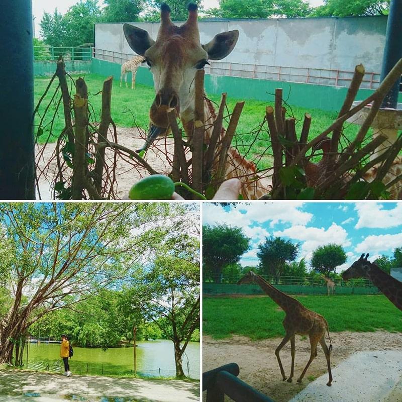 Những loài động vật ở khu du lịch sinh thái Vườn Xoài