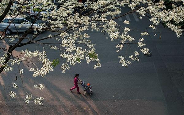 Du lịch Hà Nội tháng 3 lãng mạn những mùa hoa