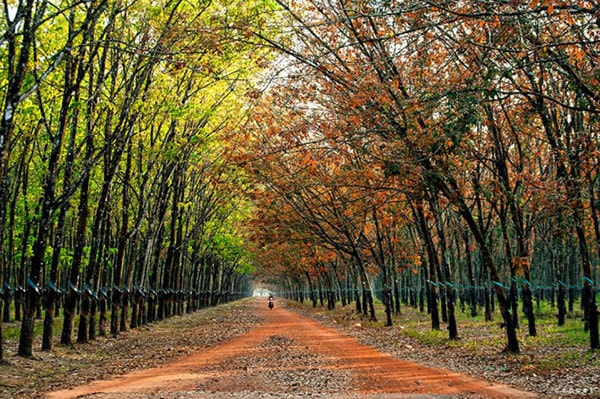 Tháng 3 đi du lịch các tỉnh Đông Nam Bộ