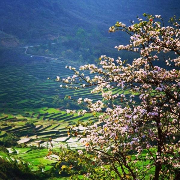 Du lịch Điện Biên tháng 3 mùa hoa ban