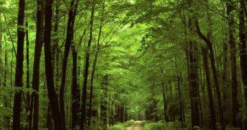 Du lịch sinh thái - loại hình du lịch hấp dẫn