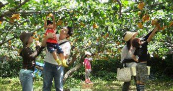 """Một ngày khám phá """"vườn trái cây"""" Cái Mơn 1"""