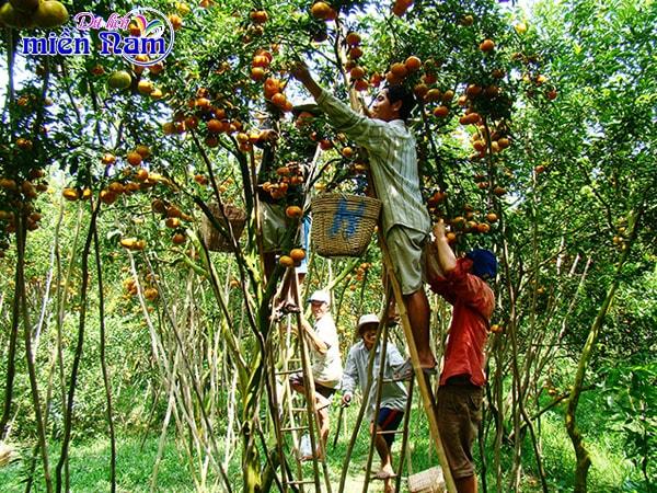 Thưởng thức trái cây thơm ngon, chín mọng