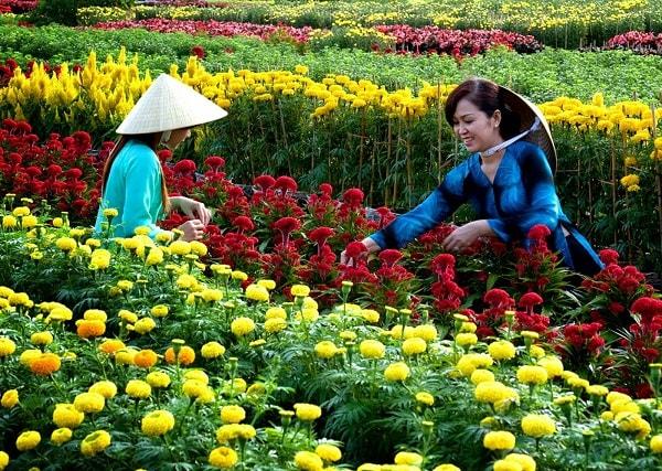 Làng hoa kiểng Sa Đéc khiến du khách nao lòng